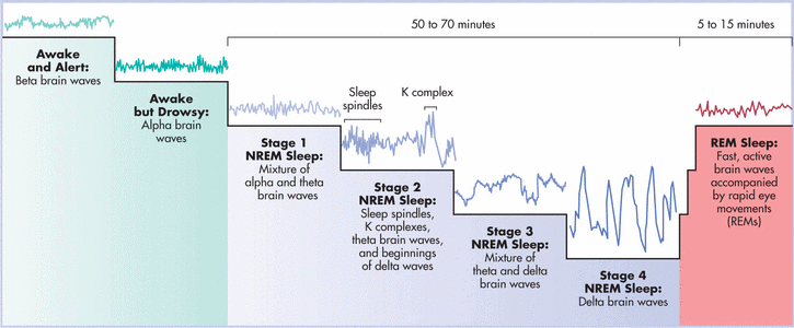 Image result for sleep cycles